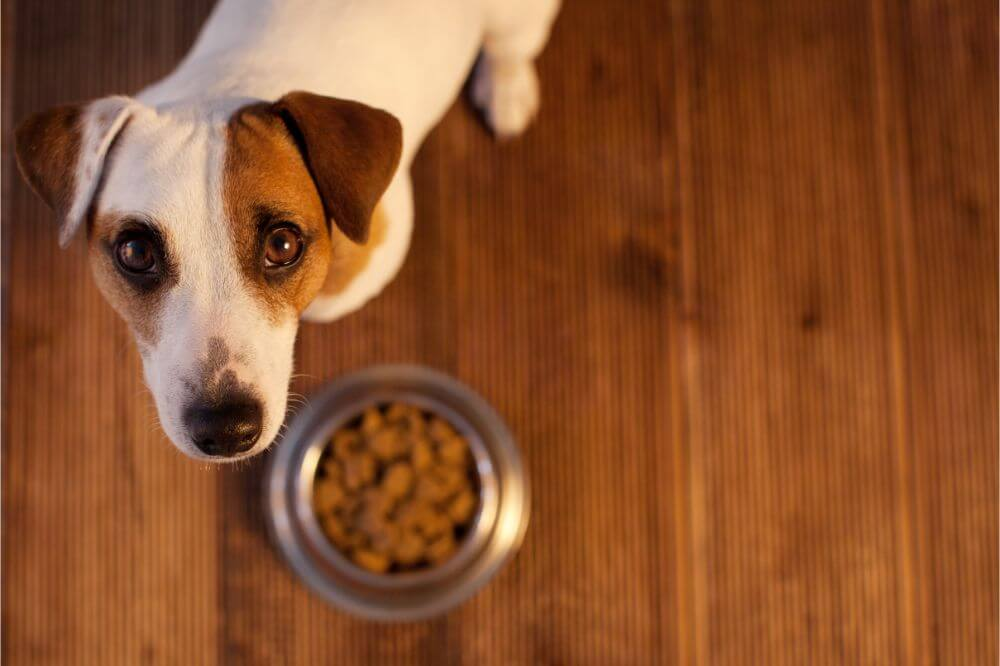 What Are The Best Brands of Dog Food