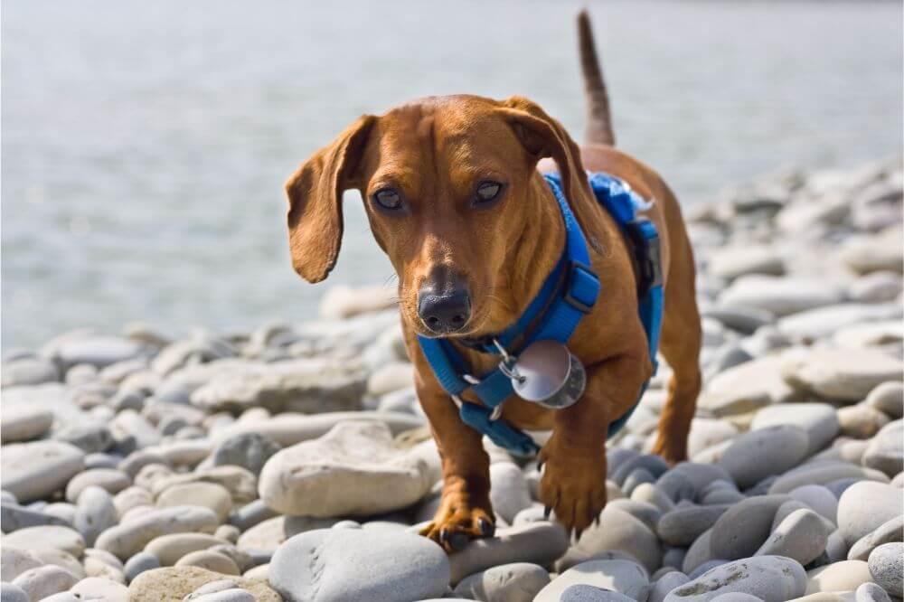 OneTigris Small Dog Vest Beast MOJO Tactical Dog Harness