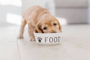 What to Look for In a Good Dog Food