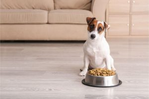 Is There a Difference Between Puppy Food and Dog Food?