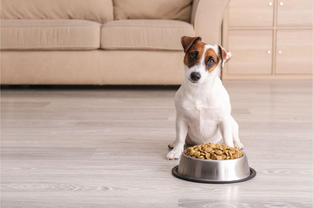 Is There a Difference Between Puppy Food and Dog Food