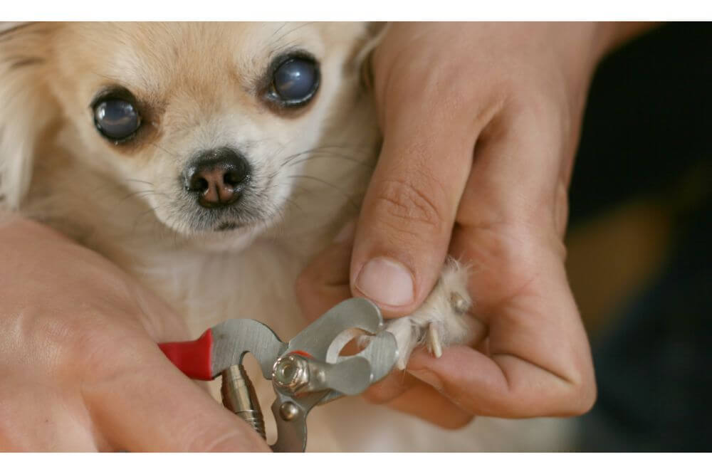 PetSpy Best Dog Nail Clippers