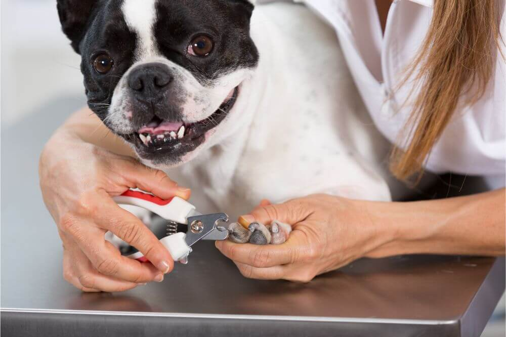 When Can You Cut A Puppy's Nails