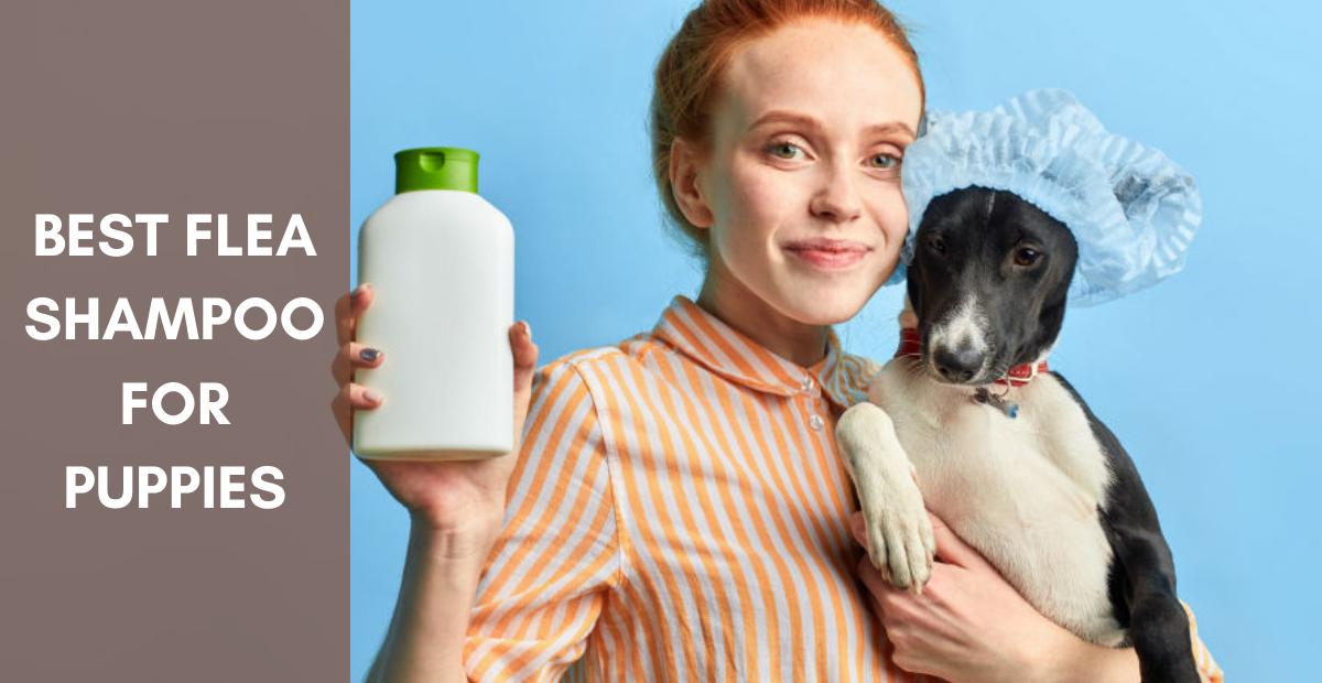 Best Flea Shampoo For Puppies