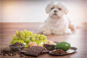 Why You Shouldn't Feed Your Dog Human Food