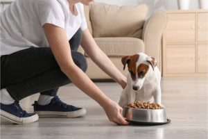 Best Dog Food For Allergies of 2020 Complete Reviews with Comparisons