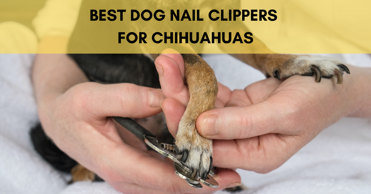 Best Dog Nail clippers for Chihuahuas