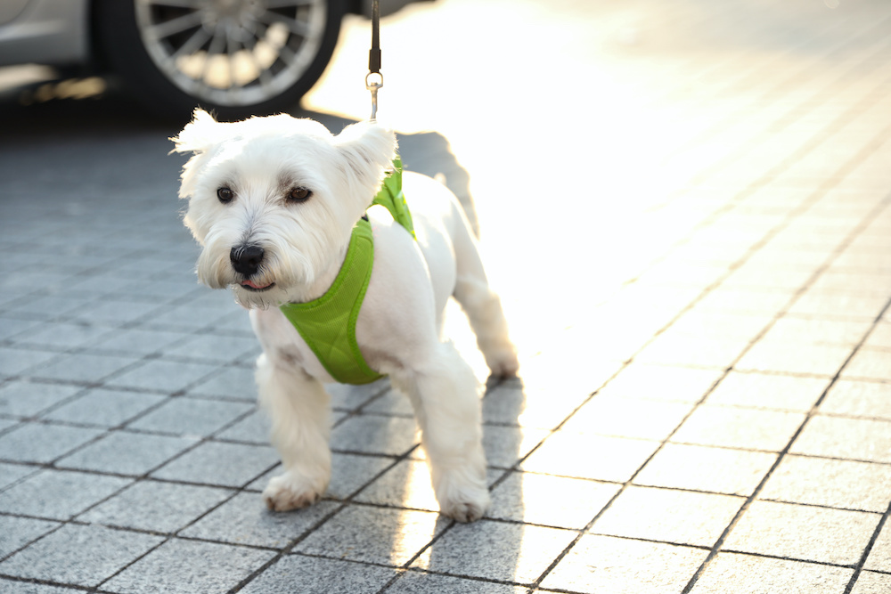 are harnesses good for dogs