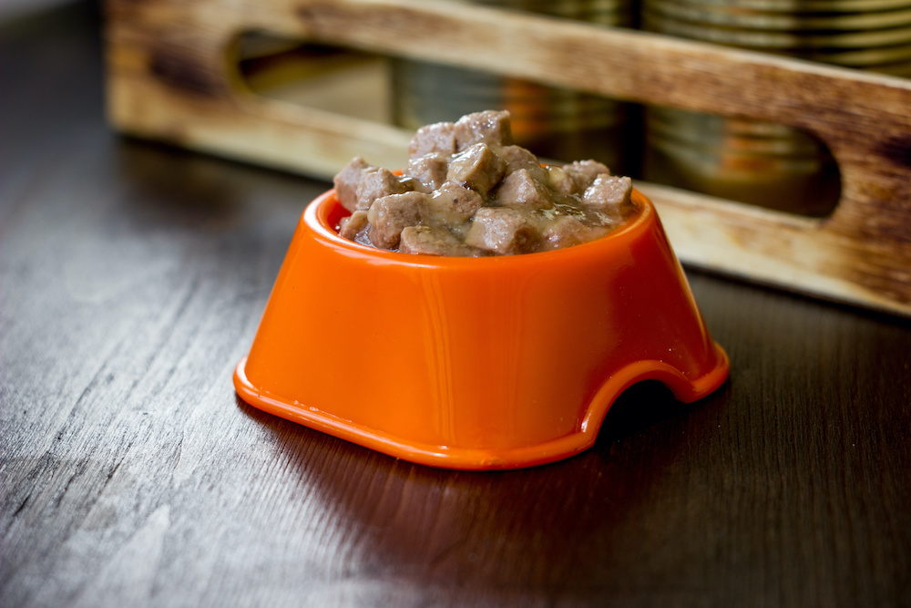 best soft dog food for senior dogs