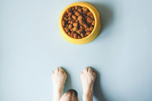 What Does Grain Free Dog Food Mean?