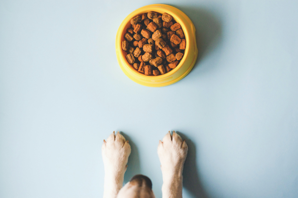 what does grain free dog food mean
