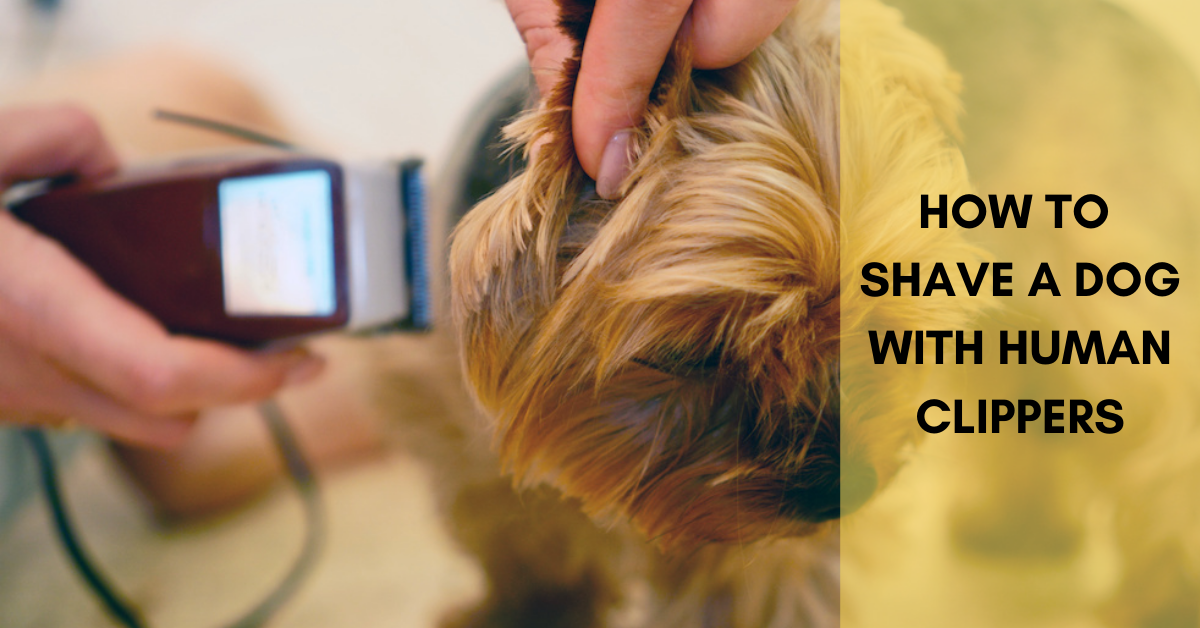 How to shave a dog with human clippers