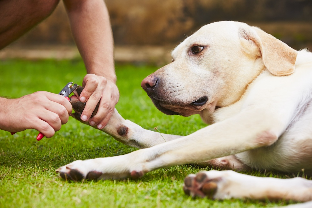 best dog nail clippers for large breeds