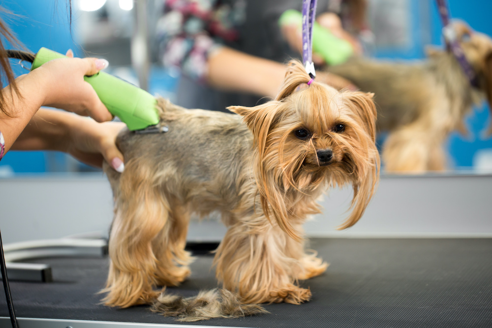 how to use dog clippers with combs